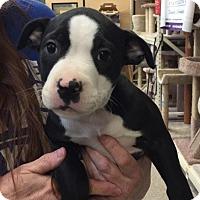 Adopt A Pet :: Winnie/Duke/Dane - Modesto, CA