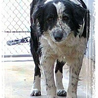 Adopt A Pet :: Freckles - Parker, KS