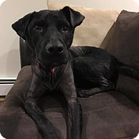 Adopt A Pet :: Gideon - Harrisville, RI