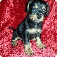 Adopt A Pet :: Finn - Seaford, DE