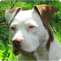 Adopt A Pet :: Kenzie - Jacksonville, FL