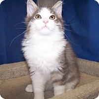 Adopt A Pet :: K-Yvonne4-Tanner - Colorado Springs, CO