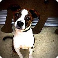Adopt A Pet :: Motor - Houston, TX