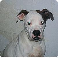 Adopt A Pet :: Chance - Tallahassee, FL