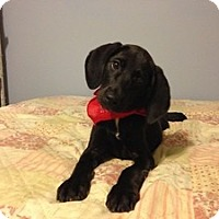 Adopt A Pet :: Baby Chester - Marlton, NJ