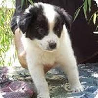 Adopt A Pet :: Adeline - Brattleboro, VT