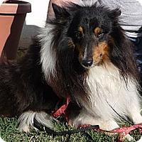 Adopt A Pet :: Brewster - San Diego, CA