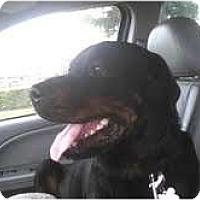 Adopt A Pet :: Hannah - miami beach, FL