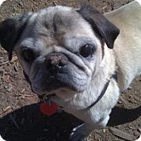 Adopt A Pet :: Ozzie - Strasburg, CO