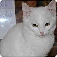 Adopt A Pet :: Dyno - Modesto, CA