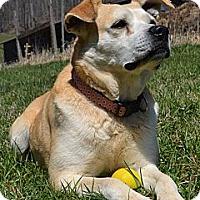 Adopt A Pet :: Brenda - Bakersville, NC