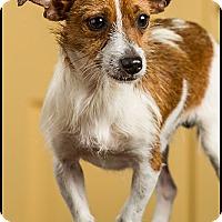 Adopt A Pet :: Mason - Owensboro, KY