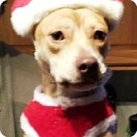 Adopt A Pet :: Abby - Bartonsville, PA