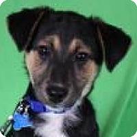 Adopt A Pet :: Ryder - Minneapolis, MN