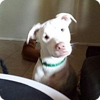 Adopt A Pet :: Ailbe - Scottsdale, AZ