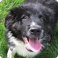 Adopt A Pet :: Declan - Phoenix, AZ