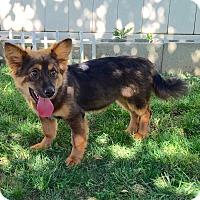 Adopt A Pet :: Murphy - Buena Park, CA