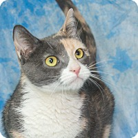 Adopt A Pet :: Gwen - Elmwood Park, NJ