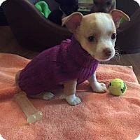 Adopt A Pet :: Rae - Marietta, GA