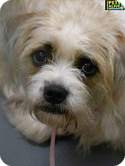 Terrier (Unknown Type, Medium) Mix Dog for adoption in Memphis, Tennessee - Ricky Lee