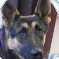 Adopt A Pet :: Vixen - Red Bluff, CA