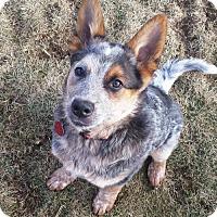 Adopt A Pet :: NicNak - PENDING ADOPTION! - Creston, OH
