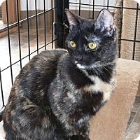 Domestic Shorthair Cat for adoption in Massapequa, New York - Jezebel