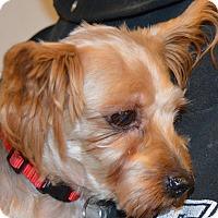 Adopt A Pet :: Gabriels - Prole, IA