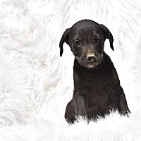 Adopt A Pet :: calder - Groton, MA