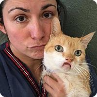 Adopt A Pet :: Ansley - Cerritos, CA