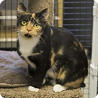 Adopt A Pet :: Twizzler - Kettering, OH