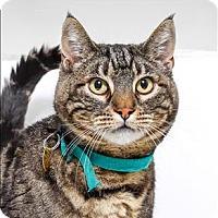 Adopt A Pet :: Scrappers - San Luis Obispo, CA