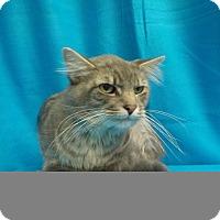 Adopt A Pet :: Little One - Waldorf, MD