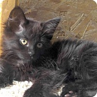 Adopt A Pet :: Swiffer - Addison, IL