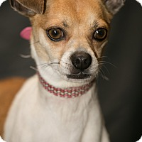 Adopt A Pet :: Mary Kate - Inglewood, CA