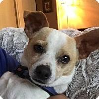 Adopt A Pet :: Obie - Independence, MO