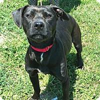 Adopt A Pet :: Sasha - Lisbon, OH
