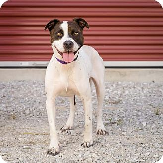 Terrier (Unknown Type, Medium) Mix Dog for adoption in Columbia, Illinois - Billie Jean