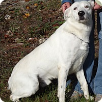 Adopt A Pet :: 20791 - Cheboygan, MI