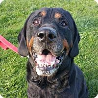 Adopt A Pet :: Sheldon - Lisbon, OH