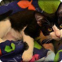 Adopt A Pet :: Geneva - Beaumont, TX