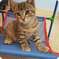 Adopt A Pet :: Robin - Circleville, OH