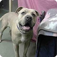 Adopt A Pet :: Chewy-URGENT 12/9 @ DEVORE - San Bernardino, CA