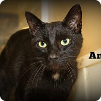 Adopt A Pet :: Andy - Springfield, PA