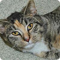 Adopt A Pet :: Crystal - Windsor, VA