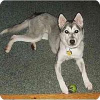 Adopt A Pet :: Cutie Pie! - kennebunkport, ME