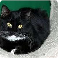 Adopt A Pet :: Adelaide (
