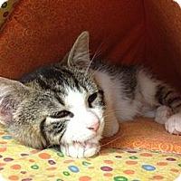 Adopt A Pet :: Dawn - Byron Center, MI