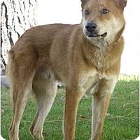 Adopt A Pet :: Noah - Marina del Rey, CA