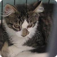 Adopt A Pet :: Cranberry - Raritan, NJ
